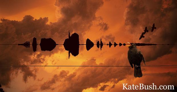 Aerial Inlay Image 2 Kate Bush